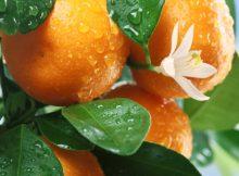 Экопродукты для красоты и молодости: мандарин